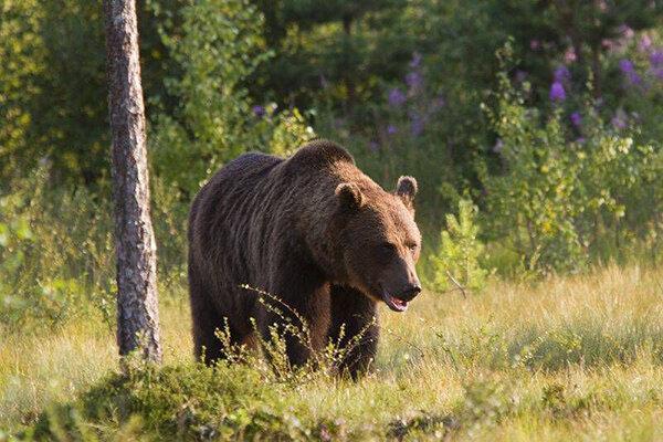 حمله خرس به نوجوان باغملکی