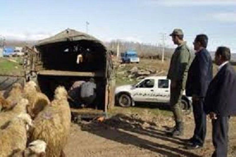 خبرنگاران سارقان احشام در بروجرد دستگیر شدند