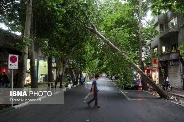 باد 15 درخت را در کرج شکست