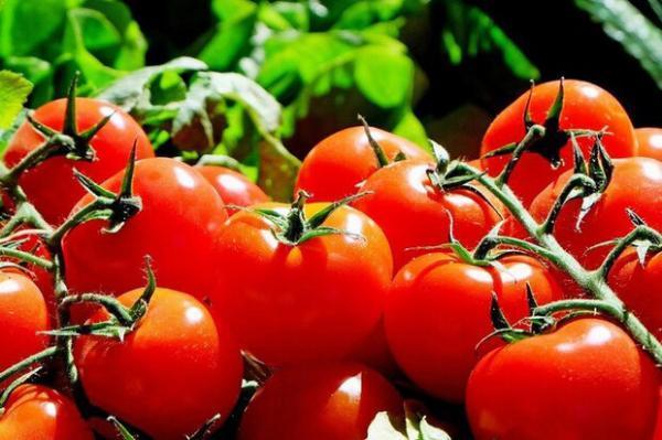 دستکاری فرایند رشد گوجه فرنگی برای اولین بار ممکن شد