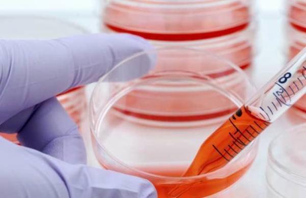 سلول های بنیادی جایگزین اندام های از دست رفته بدن می شوند