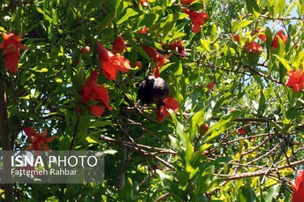 زیبایی های شهر تفت باغشهر در یزد